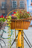 Flowers and Bicycle Decoration. Flowers in a basket on a Bicycle royalty free stock image