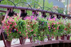The Flowers on the bridge. These flowers were on this small bridge in Reno, NV Royalty Free Stock Image