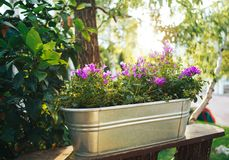 Flowers big bucket in the street. Sunset rays on flowers royalty free stock image