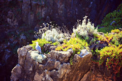 Flowers and bird on the Oceanside Cliffs Royalty Free Stock Image