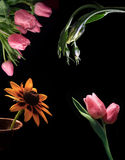 Flowers on black Stock Image