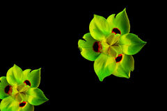 Flowers on a black background. Six petals of flowers on a black background Royalty Free Stock Images