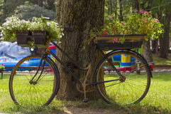 Flowers on a black bicycle in the park Royalty Free Stock Photos