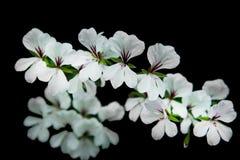 Flowers on the black scene. Flowers on black scene, active wallpaper stock photos