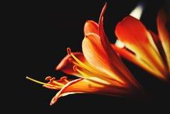 Flowers. Black, sun stock photos