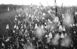 Flowers, Black And White, Black Stock Image
