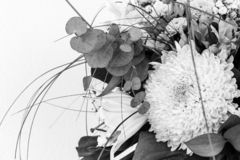 Flowers in black and white on white background. Copy space royalty free stock image