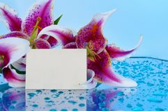 Flowers with blank card Royalty Free Stock Photos