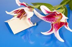 Flowers with blank card Stock Image