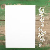 Flowers and blank paper Stock Images