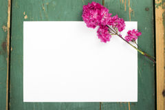 Flowers and blank paper Royalty Free Stock Images