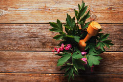 Flowers bleeding heart in mortar with pestle Royalty Free Stock Image