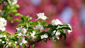 Of flowers in bloom Stock Photography
