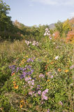 Flowers bloom along Crawford Notch, New Hampshire Stock Photos