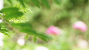 Flowers bloom on bush in green garden. Summer view stock video