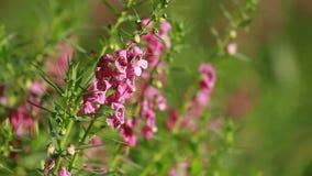 Flowers bloom. In the garden stock video footage