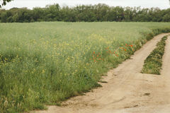 Flowers in bloom on a green field with a sand pathway Royalty Free Stock Photography