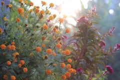 morning in the  garden Royalty Free Stock Image