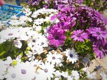 Flowers bloom purple spring Stock Image