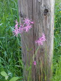 Flowers. Bloom, wood, grass, background Royalty Free Stock Photos