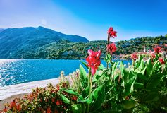 Flowers blooming in Ascona luxury tourist resort. Promenade on Lake Maggiore in Ticino canton in Switzerland in summer. People outdoor street travel. Romantic stock photo