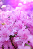 Flowers blooming. Stock Image