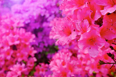 Flowers blooming. Stock Photo