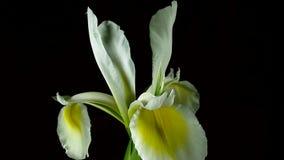 Flowers in blooming stock footage