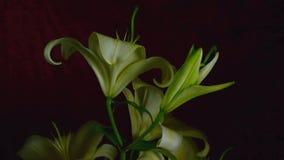Flowers in blooming stock video