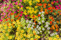 Flowers blooming closeup Royalty Free Stock Image