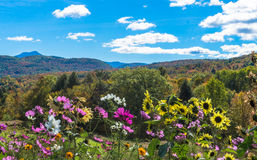 Flowers blooming with fall foliage in the hills Royalty Free Stock Photo