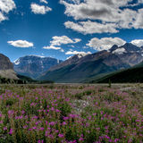 Flowers blooming in front of mountains Royalty Free Stock Images