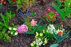 Flowers blooming in garden terrace of Sanssouci Park in Potsdam Royalty Free Stock Photography