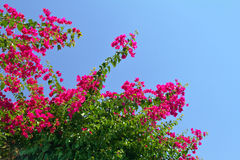 Free Flowers Blooming In The Sunshine Royalty Free Stock Photo - 40762475
