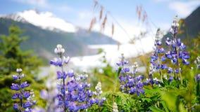 Flowers Blooming in Juneau, Alaska stock images