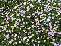 Flowers blooming royalty free stock photos