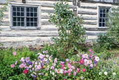 Flowers Blooming by Old Fashioned Log Home stock photo