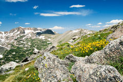 Flowers Blooming in Summer Mountains Landscape Royalty Free Stock Photos