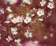 Flowers. Royalty Free Stock Photo