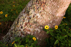 Flowers blooming by tree trunk Royalty Free Stock Photography