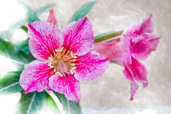 Flowers blooms, watercolor style. Royalty Free Stock Image