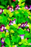 Flowers Blossom. Flowers summer blossoms green purple beauty growth landscape design photography image Royalty Free Stock Image