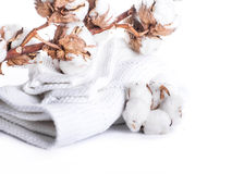 Flowers blossoming cotton Stock Photos