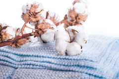 Flowers blossoming cotton Stock Photo