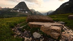 Flowers Blow at Sunset on Logan Pass. In Montana mountains stock video