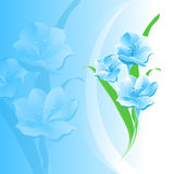 Flowers blue background Stock Images