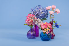 Flowers on blue background Royalty Free Stock Photography