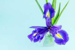 Flowers blue purple irises with leaves, glass vase top view Royalty Free Stock Photos