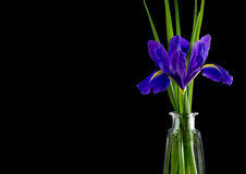 Flowers blue purple irises with leaves, glass vase top view Stock Photos