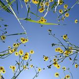 Flowers and blue sky. Flowers and blue sky, bottom view Stock Photography